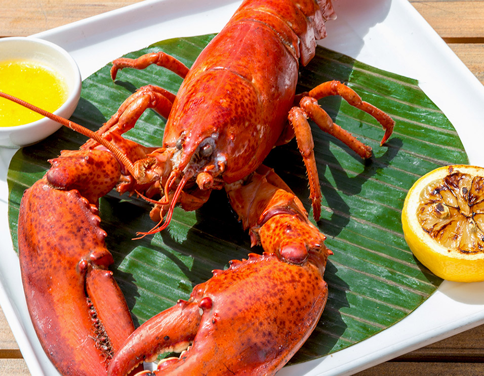 Lobster Grill is Back Starting July 12th